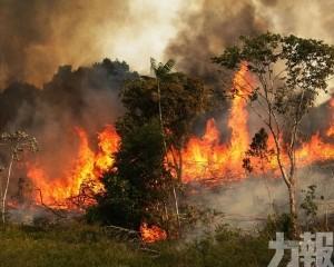 庫克:蘋果將捐款修復亞馬遜雨林