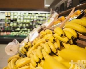 2050年香蕉或許會消失