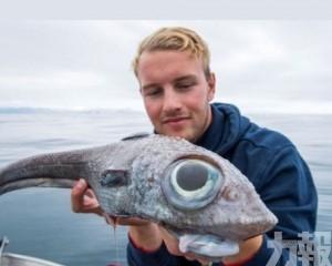 挪威少年800米深海域釣岀「巨眼怪魚」