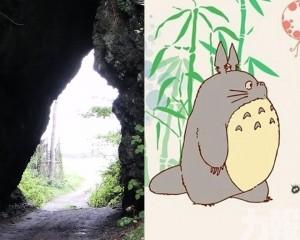 日本海邊岩穴驚現「龍貓」側影