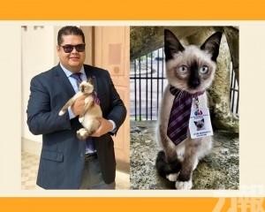 公會:直接「聘請」成貓律師