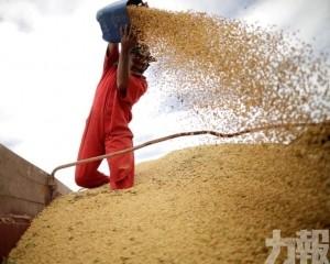 中國對巴西大豆採購激增