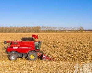 穩定糧食產能佔全國產量80%