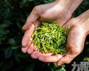 聯合國宣布每年5月21日為「國際茶日」