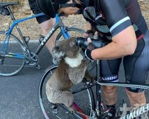 口渴樹熊爬上單車狂飲水