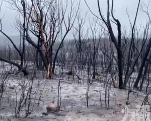 澳洲新南威爾士州山火全受控