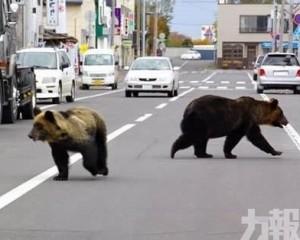 日本9個月捕殺逾5,600隻熊