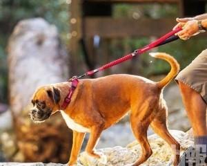 患者寵物狗對新冠病毒呈弱陽性反應