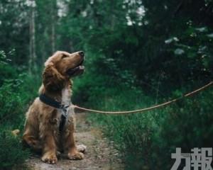 確診患者寵物狗低程度受感染