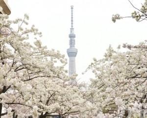 森喜朗:不考慮在春天舉行