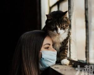 人傳貓!比利時一寵物貓被主人傳染確診