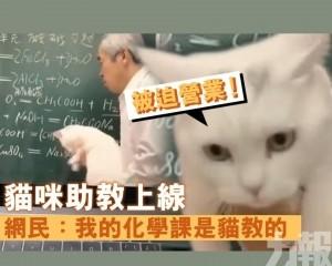 網民:我的化學課是貓教的