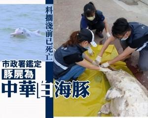 市政署鑑定豚屍為中華白海豚