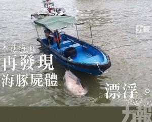 本澳海面再發現海豚屍體漂浮
