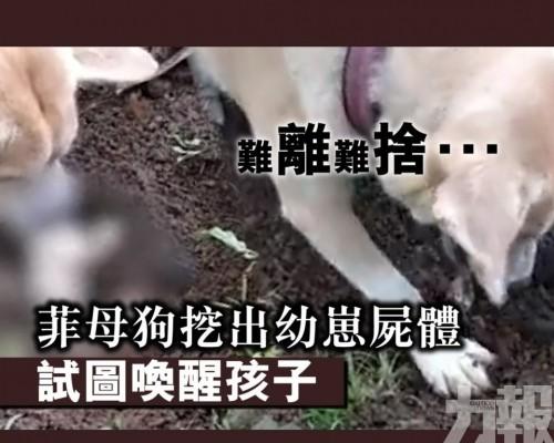 菲母狗挖出幼崽屍體 試圖喚醒孩子