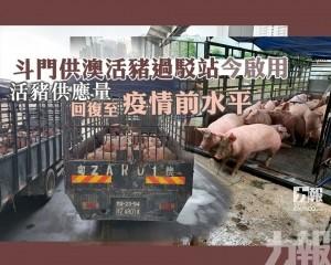 活豬供應量回復至疫情前水平