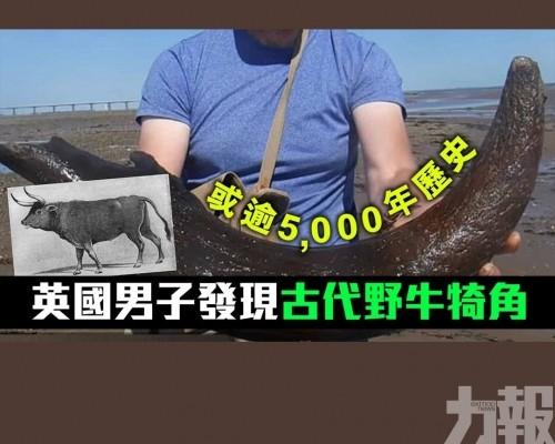 英國男子發現古代野牛犄角