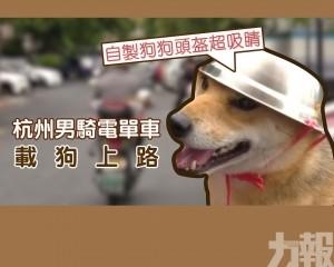 給狗戴自製頭盔