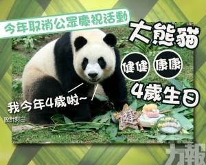 大熊貓「健健」「康康」四歲生日