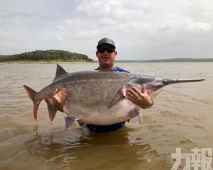 美漢湖中釣出146磅重巨大匙吻鱘