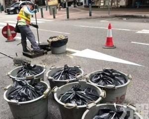 市政署:針對性制定清渠計劃