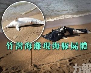 竹灣海灘現海豚屍體