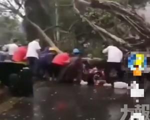 一名送貨男子被吹倒大樹砸傷