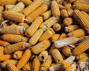 中國採購136萬噸美國玉米
