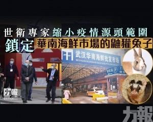 鎖定華南海鮮市場的鼬獾兔子
