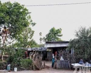 印度男子被迫樹上隔離11天