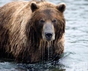 熊來了!俄夫婦躲樹上保命