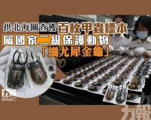 屬國家二級保護動物「細尤犀金龜」
