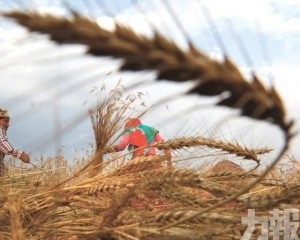 聯合國批評補貼措施扭曲食品價格