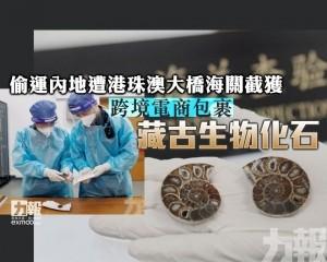 跨境電商包裹藏古生物化石