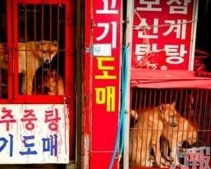 文在寅擬在全國禁食狗肉