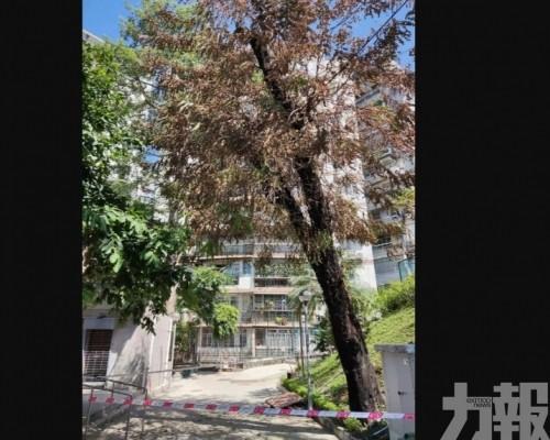 籲市民共同守護珍貴樹木資源