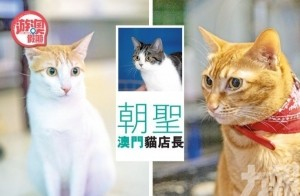 貓奴集郵指南