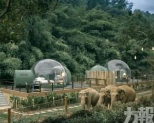 泰國夢幻透明「雨林泡泡屋」