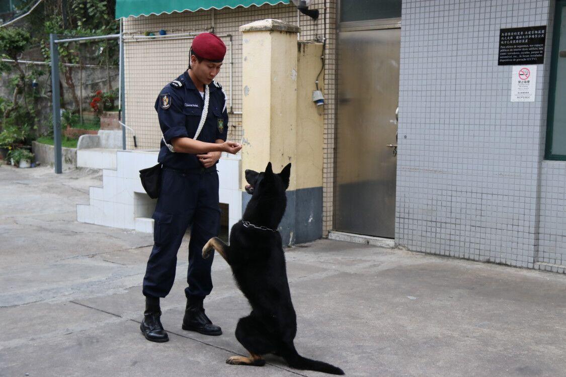 警犬隊展示各樣功能和演練