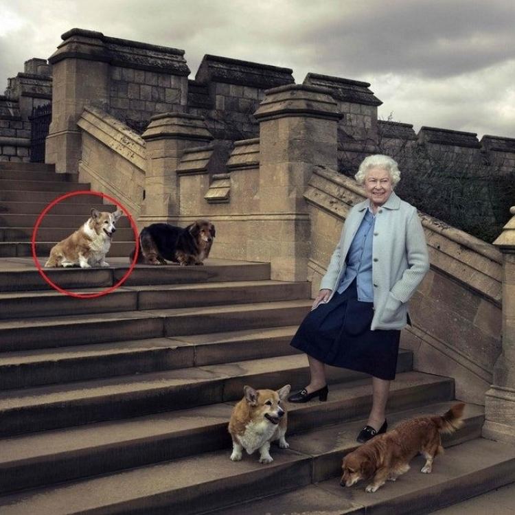 英女王最後的哥基犬Willow病逝